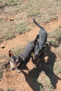 Doggies that lead the trail